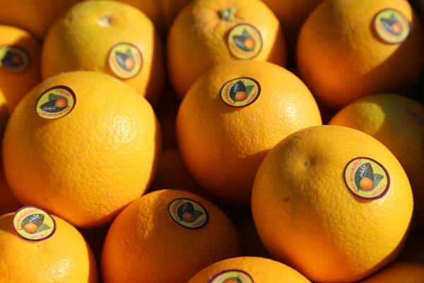 پرتقال محلی دزفول
